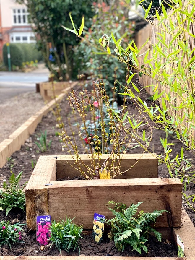 The new raised beds along the Tree-Top Hall look great